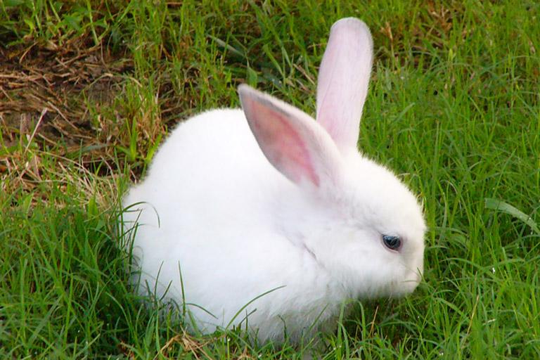 ...всё понравилось -Приснившийся белый кролик - предвещает успех -Видеть во сне спокойно сидящего зайца или кролика...