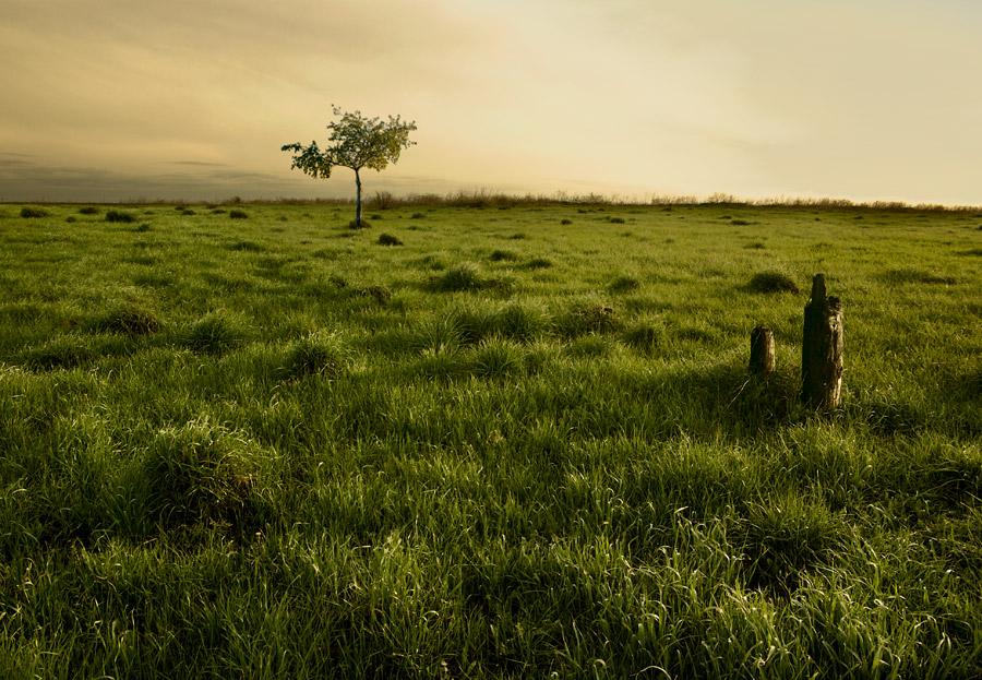 Земля непуганных кротов.
