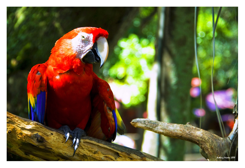 The Pirate`s parrot
