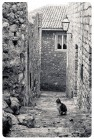 Про кота и старый город 2