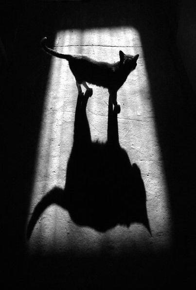 просто кот или без названия