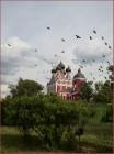 Птицы над городом
