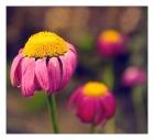 flower IV. Part II
