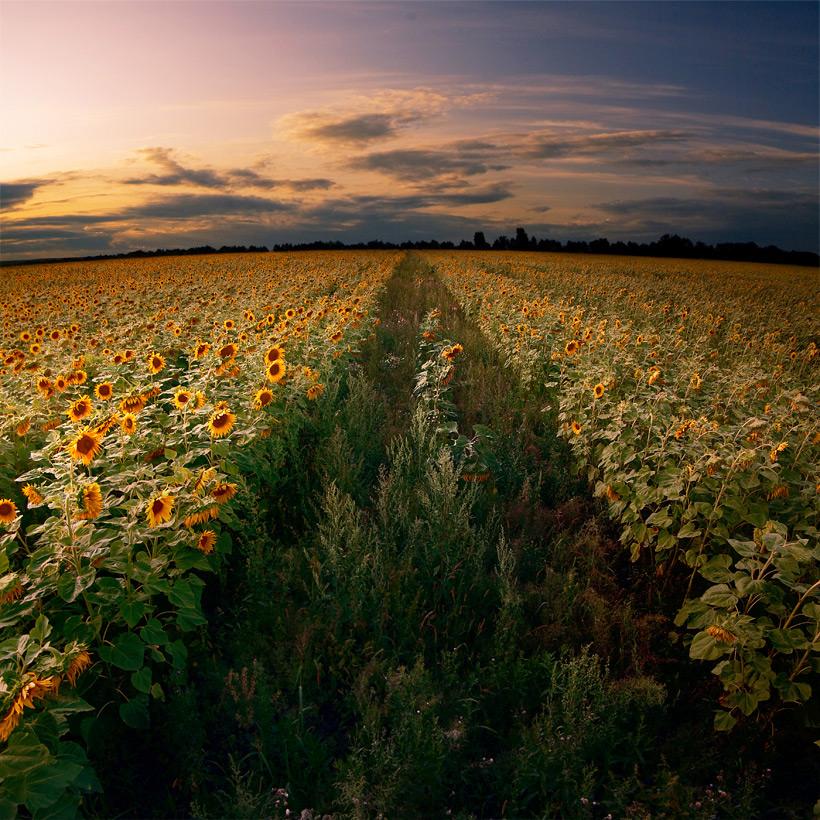 Засыпающее поле.