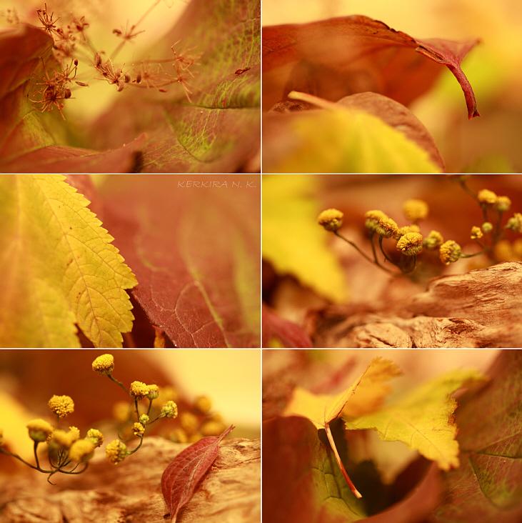 Осенняя открытка