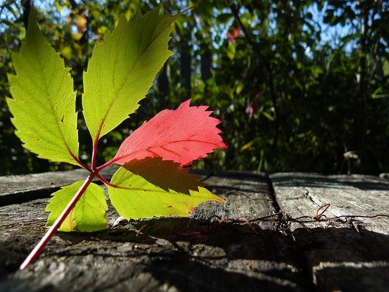 Красный цвет - осени привет