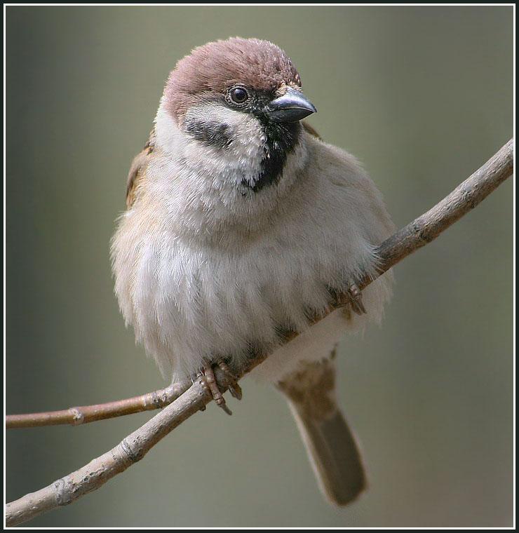 Задумчивый птах.