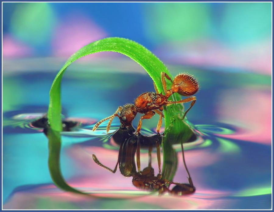 Как муравьишка в зазеркалье спешил.
