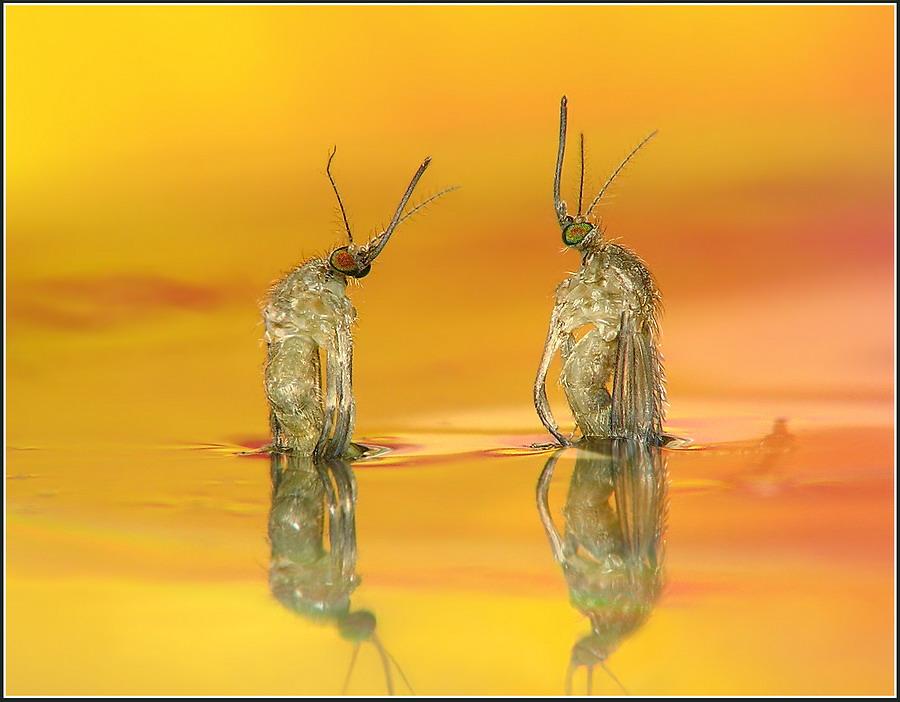Рождение комаров.