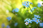 Июнь. | Forget-Me-Not |