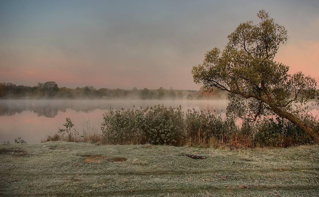 Ива, озеро, туман.