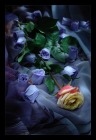 Этюд о розах