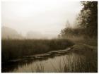 над болотом туман