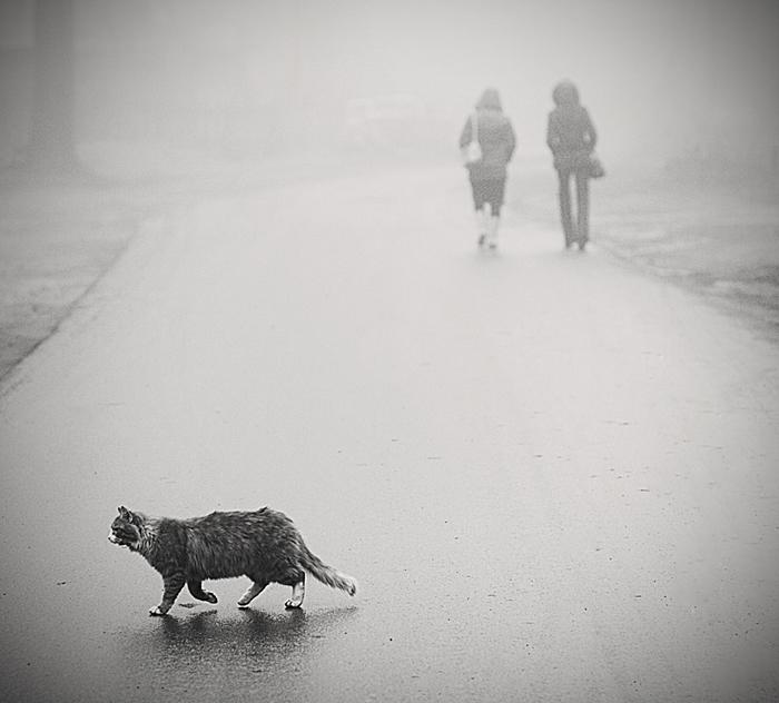 про туманные пути