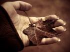 осень на ладони
