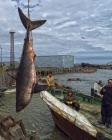 Четверг-рыбный день
