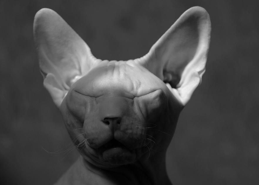 - про кота, который боится страшных историй, но всё равно их слушает... -