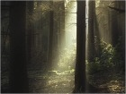 берендеев лес