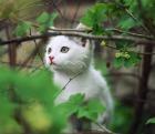 котенок шкодный