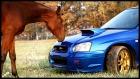 Horse VS Subaru